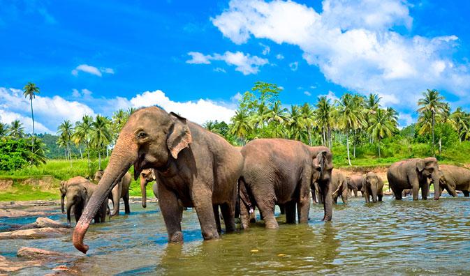 Elefantenwaisenhauses Pinnawella