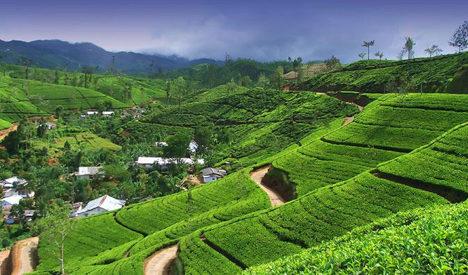 Teeanbaugebiet Nuwaraeliya